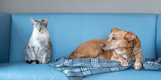 Cat Dog Sofa