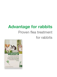 Advantage For Rabbits