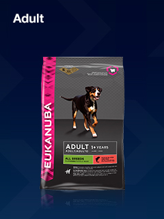 Eukanuba Adult Dog