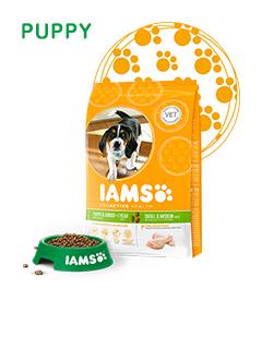 IAMS Puppy